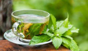 Greent Tea ACCC